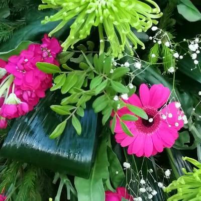 kwiaty gerbery