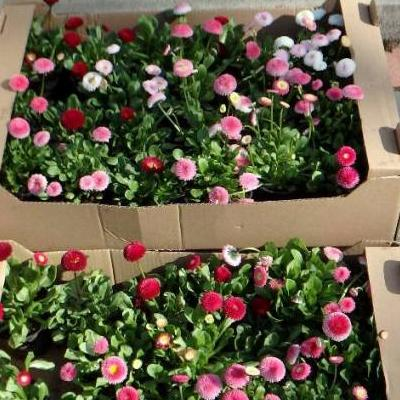 kwiaty doniczkowe 1
